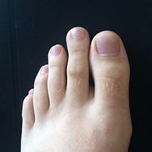 Long middle toe
